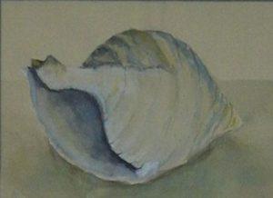 Hoermuschel Aquarell 50 x 60 cm i.R