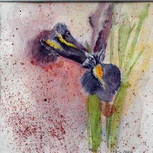 Lila Iris Aquarell 20 x 20 35 x 35 cm i.R